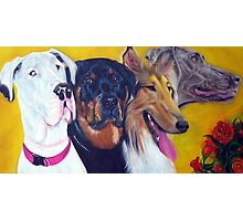 Bright and Beautiful - Companions of Therapy Photographic Print