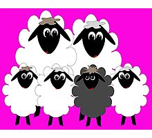 Normal family with a Black Sheep Photographic Print