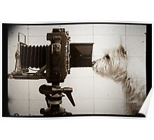 Vintage Pho Dog Grapher with View Camera Poster