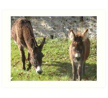 Relaxed Donkeys Art Print