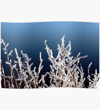 icy twigs and branches in frosty snow against blue Poster