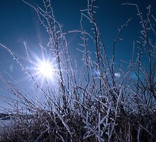 icy twigs and branches in snow against blue dawn by morrbyte