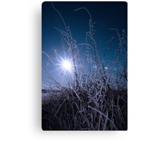 icy twigs and branches in snow against blue dawn Canvas Print