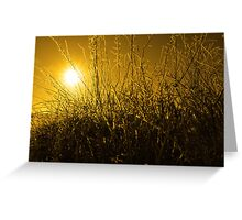 icy twigs and branches in snow against orange sunset Greeting Card