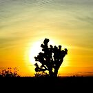 Joshua Tree by JoAnn Glennie