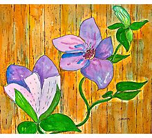 Clematis on the Fence Photographic Print