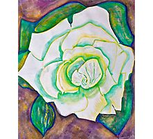 White Rose in Winter Photographic Print