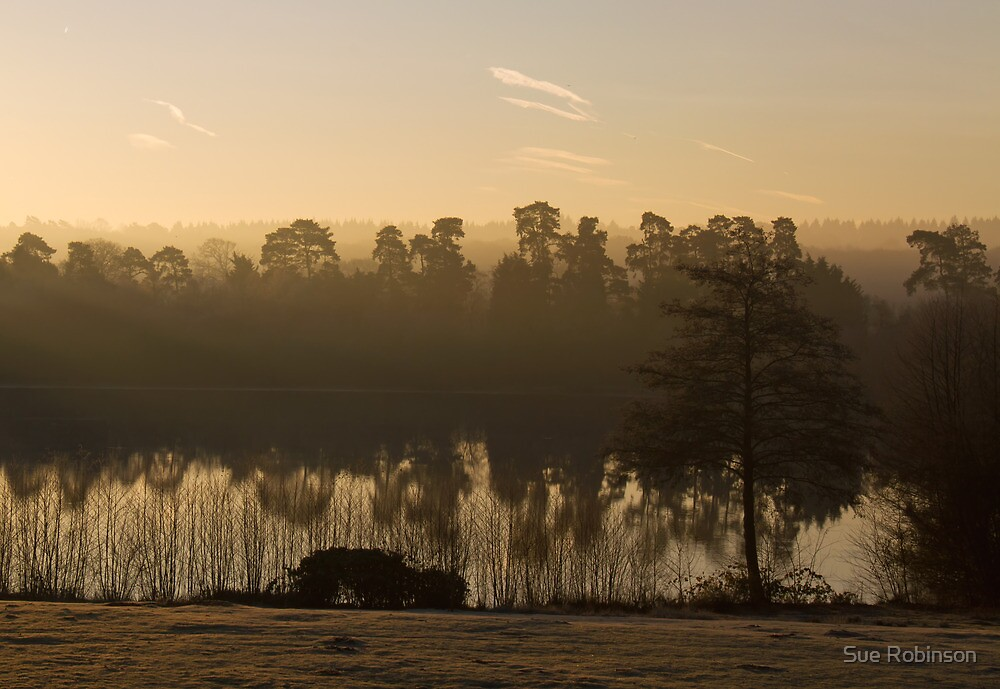 Dawn Mist at Forest Mere by Sue Robinson