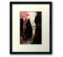 Roseate Spoonbill Framed Print