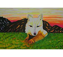 Arctic Fox in spring Photographic Print