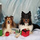Christmas Shelties by Lover1969