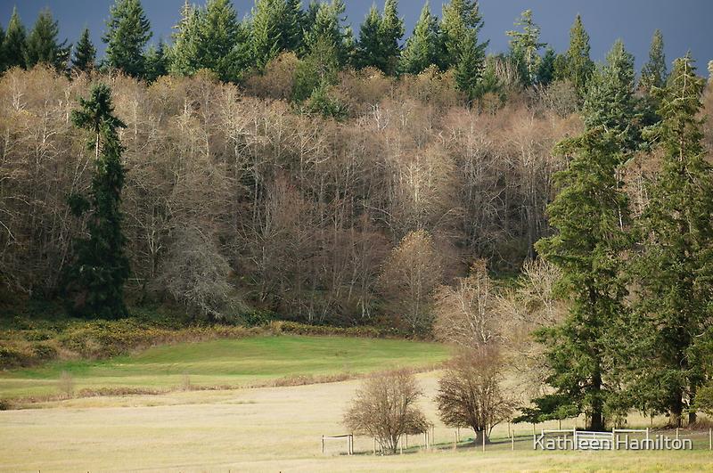 Longbranch Washington by Rainydayphotos