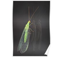 Common lacewing Poster