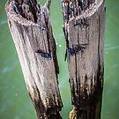 Wood Of Memories by EdwardKay