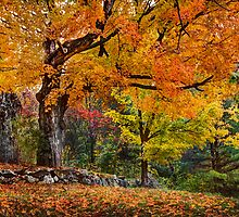 Fall Into Winter by Don  Powers