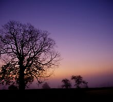 Morning Silhouette by Don  Powers