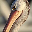 """""""Pelican Portrait"""" by jonxiv"""