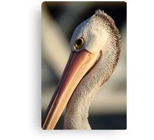 """""""Pelican Portrait"""" Canvas Print"""