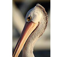 """Pelican Portrait"" Photographic Print"