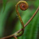 Curve, Alligators Nest, FNQ by Susan Kelly