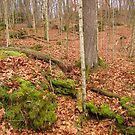 The Woodland Floor in Autumn by lorilee
