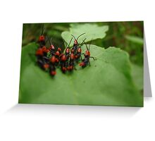 Small Hoppers Greeting Card
