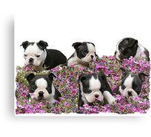 Boston blooms  Canvas Print