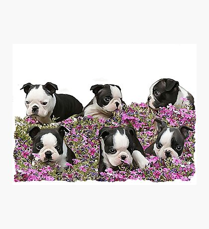 Boston blooms  Photographic Print