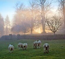 Let me sleep & dream of sheep by Cat Perkinton
