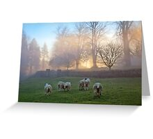 Let me sleep & dream of sheep Greeting Card