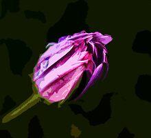 Dewy Daisy by Brian Hadwin