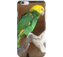Colours of the Parrot iPhone Case/Skin