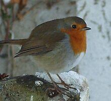 Robin by DES PALMER