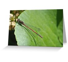Golden firefly Greeting Card