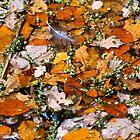 Autumn by Franc Wiedenhoff
