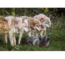 The Pack Photographic Print