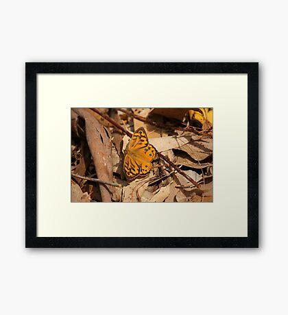 Orange Marvel Framed Print