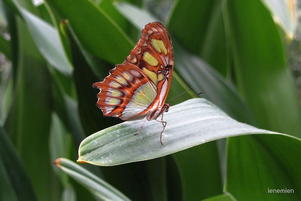 Butterfly between de Leaves by ienemien