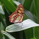 Butterfly between de Leaves by ienemien