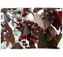 Unknown Fall Fruit 1 Poster