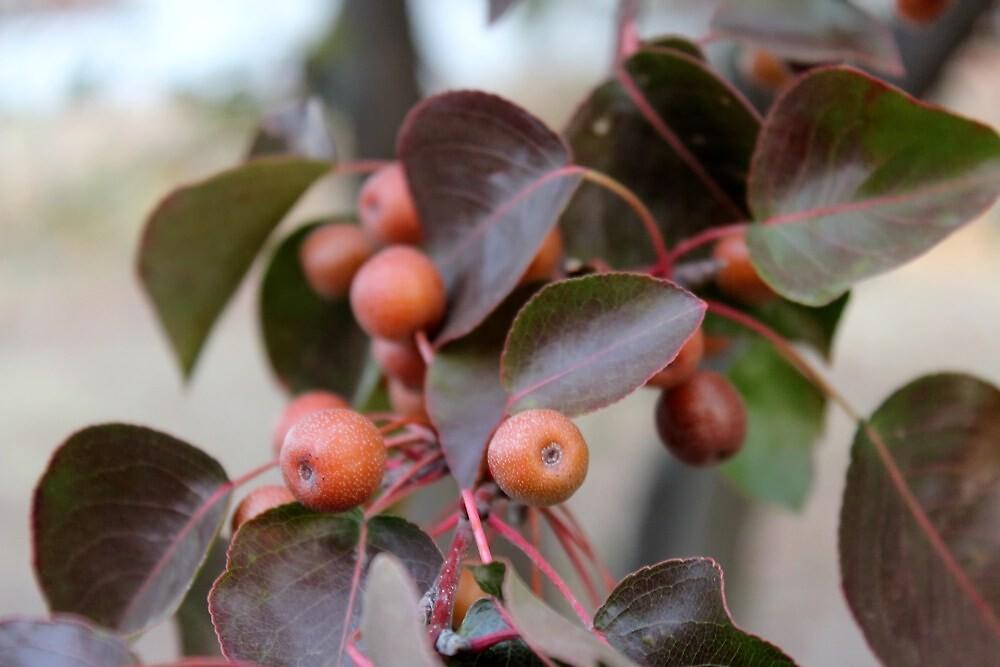 Unknown Autumn Fruit 3 by Carolyn  Fletcher