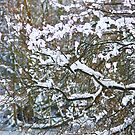 winter branches by Steve Shand