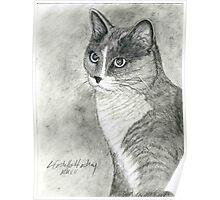 Tabby Cat Portrait Poster