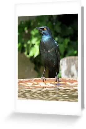 Blue starling by Elizabeth Kendall