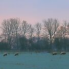 Sunrise05/12/2012 08:02:47 by Stephen J  Dowdell