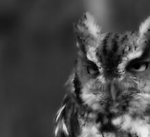 If you had been through, what I just expereanced, you would look grouchy too! B&W of Eastern Screech Owl by NatureGreeting Cards ©ccwri