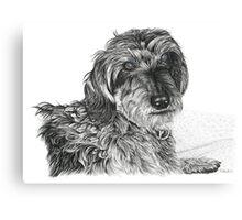Schnell, Wire Haired Dachschund Canvas Print