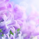 The Flowers of Purple by halljl