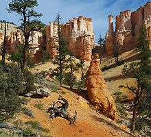 Dry logs, trees and fantastic rock torrets in Bryce Canyon National Park, Utah by Claudio Del Luongo