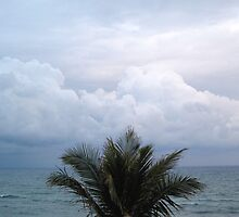 Palm Ocean Sky 2 by alanmccormick